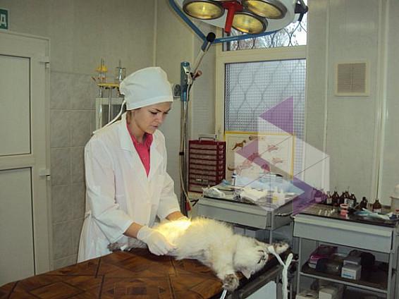 станция по борьбе с болезнями животных сзао согревающие качества