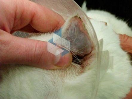 Как выглядит и какие симптомы отита у котят